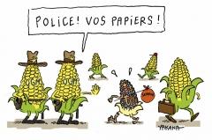 mais-ogm-semences-paysannes.jpg